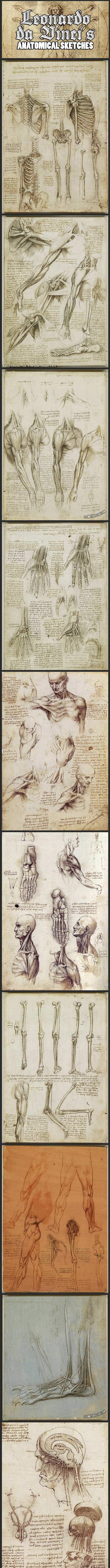 cool-Leonardo-DaVinci-anatomical-sketches